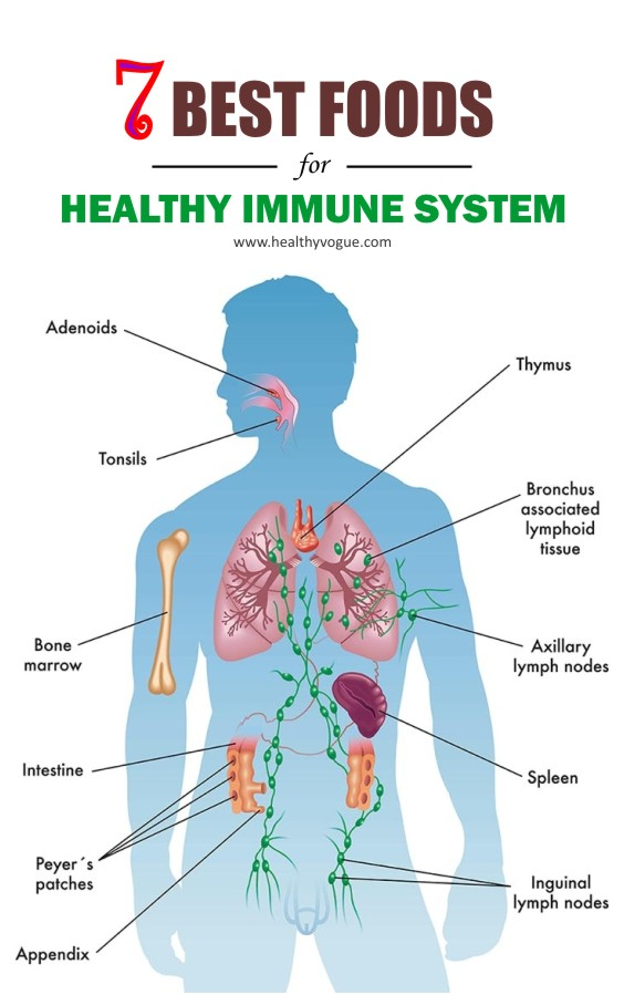 Let's have a look at the 7 foods that help our immune system in getting better. #immunesystem #healthyfood