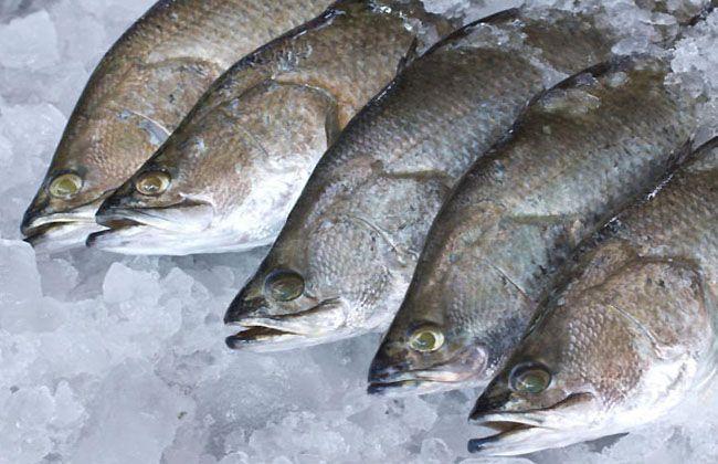 Dory Fish Health Benefits