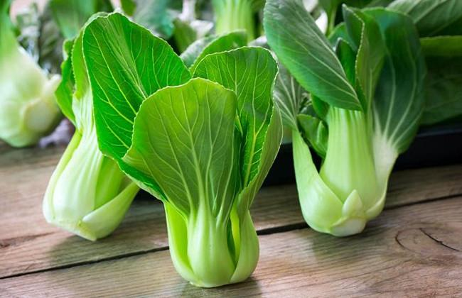 Bok Choy - Protein Diet to Lose Weight Fast Menu