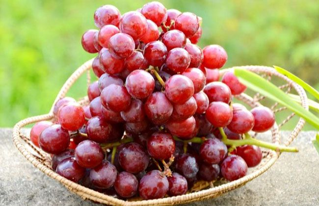 Are Red Grapes Good for a Diet