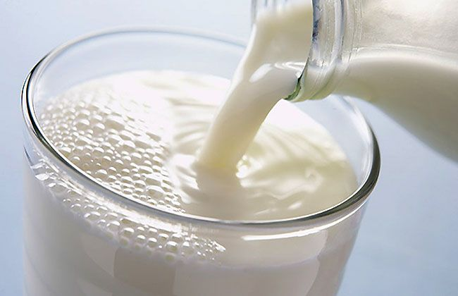 Is dairy good for weight loss