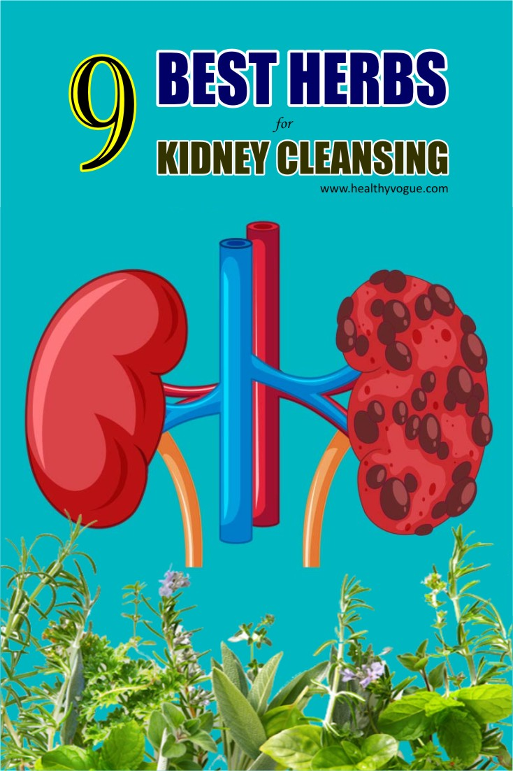 Kidney disease mostly unnoticeable until we get infected by any malfunctioning in it. One should be concerned about the kidney's health and this article depicts nine best herbs for kidney cleanse. #kidneycleanse #kidneystones #kidneyshealth
